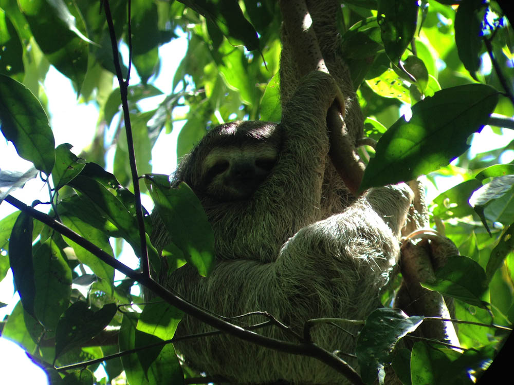 Costa Rica also has some of the most easy going creatures ever... sloths!