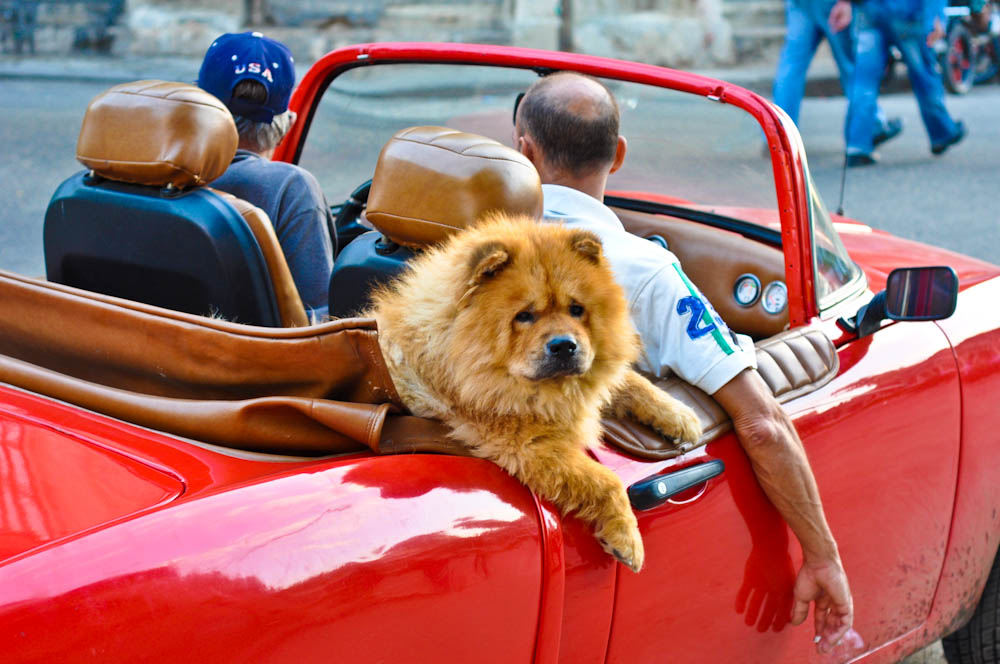 A ride in style in Havana, Cuba