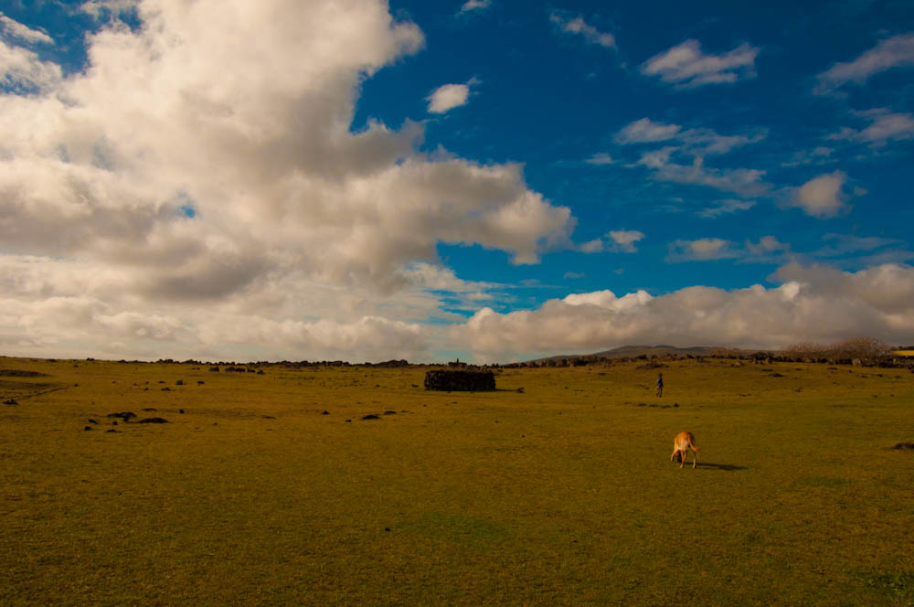 Typical landscape of Easter Island: grass is not very abundant