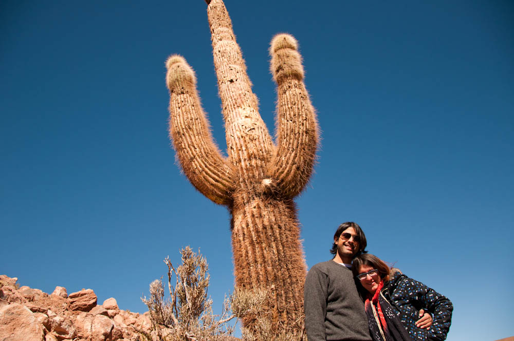 The biggest cactus in town!
