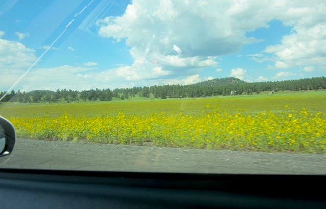 Flower fields on the route from Phoenix to The Grand Canyon