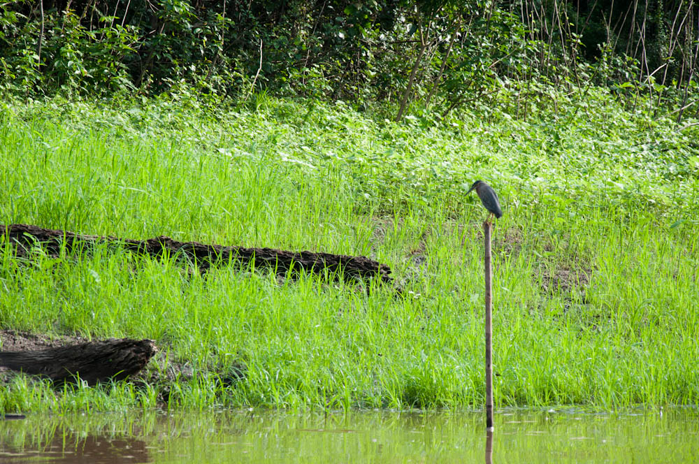 Bird enjoying the early morning in the rain forest