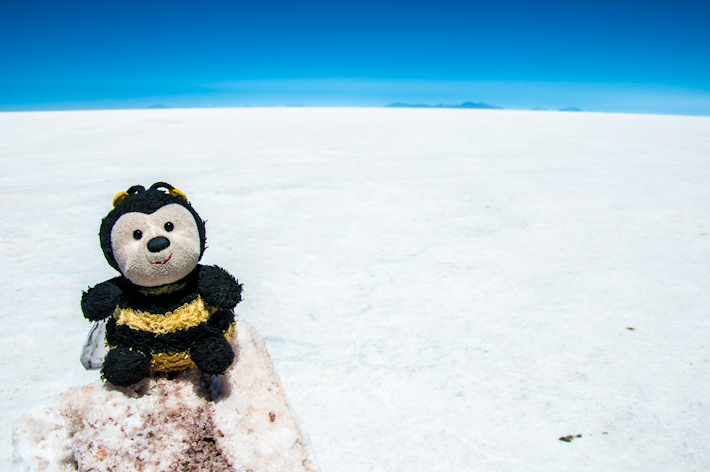 Everything looks white in Salar de Uyuni. Except Bee.